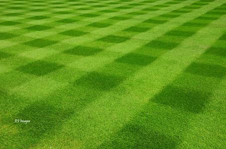 A Lawn Mowed In Diamond pattern