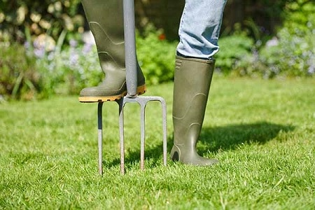Woman aerating the garden lawn with a digging fork