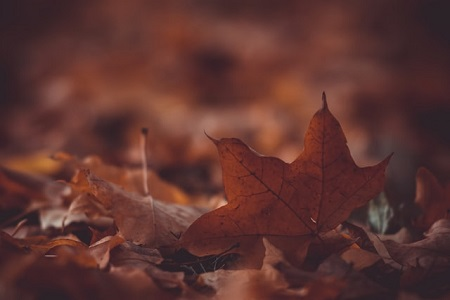 Swirling Autumn Leaves