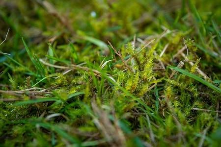 Growing A Moss Lawn