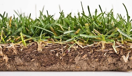 Dealing With Excess Thatch In Lawn